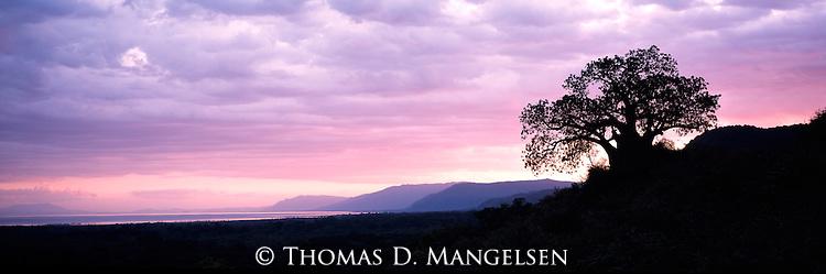 A silhouetted tree at Lake Manyara in Tanzania.
