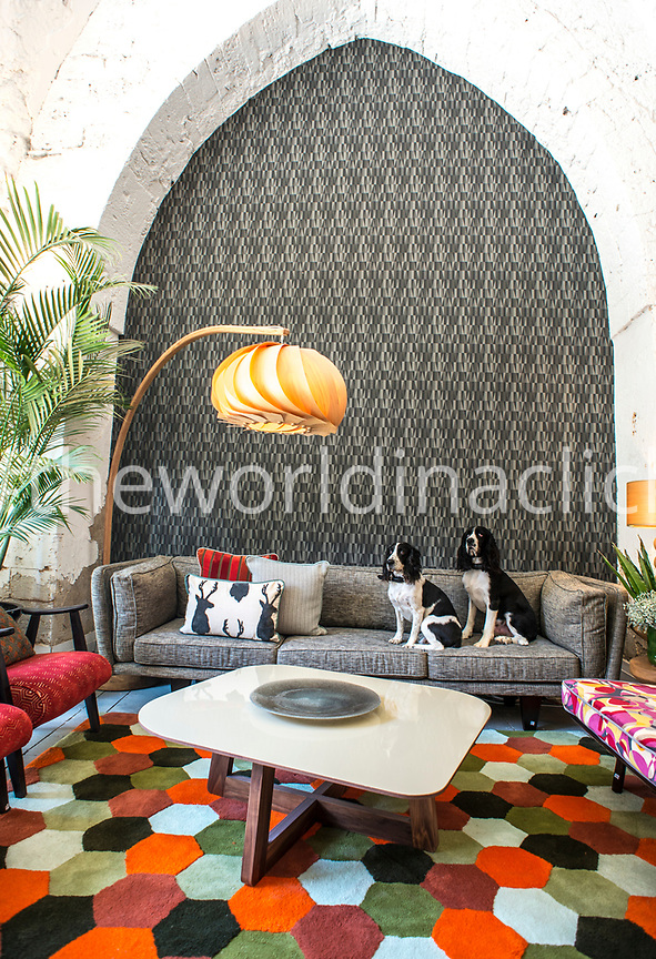 ISRAEL,  Tel Aviv, a Sofa with two dogs sitting in Elemento Furniture Store in Jaffa