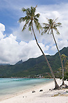 Temae Beach, Moorea, French Polynesia; two palm trees near the water's edge at Temae Beach , Copyright © Matthew Meier, matthewmeierphoto.com All Rights Reserved