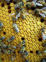 Apicoltura Beekeeping