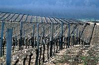 Europe/France/Midi-Pyrénées/46/Lot/Vallée du Lot/Vignoble de Cahors/Env Douelle: Vignoble des côtes d'Olt en hiver
