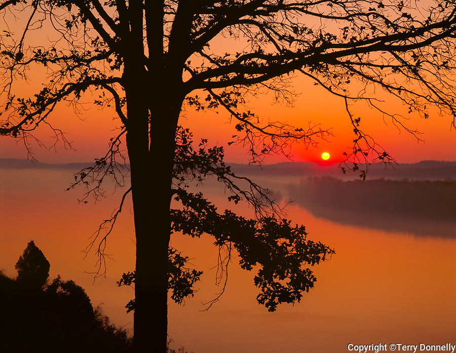 Cave in Rock State Park, IL<br /> Sunrise silhouetting trees above the Ohio River Valley