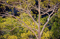 Australian-Pacific-FLORA-tree-plant-flower