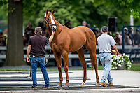 ELMONT, NY - JUNE 06: Triple Crown hopeful Justify gets a bath with assistant trainer Jimmy Barnes at Belmont Park on June 06, 2018 in Elmont, New York. (Photo by Alex Evers/Eclipse Sportswire/Getty Images)