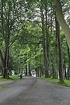 Tree lined path in park, Nordnesparken, Nordnes area of city of Bergen, Norway