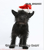 Kim, CHRISTMAS ANIMALS, WEIHNACHTEN TIERE, NAVIDAD ANIMALES, fondless, photos+++++,GBJBWP22855,#xa#