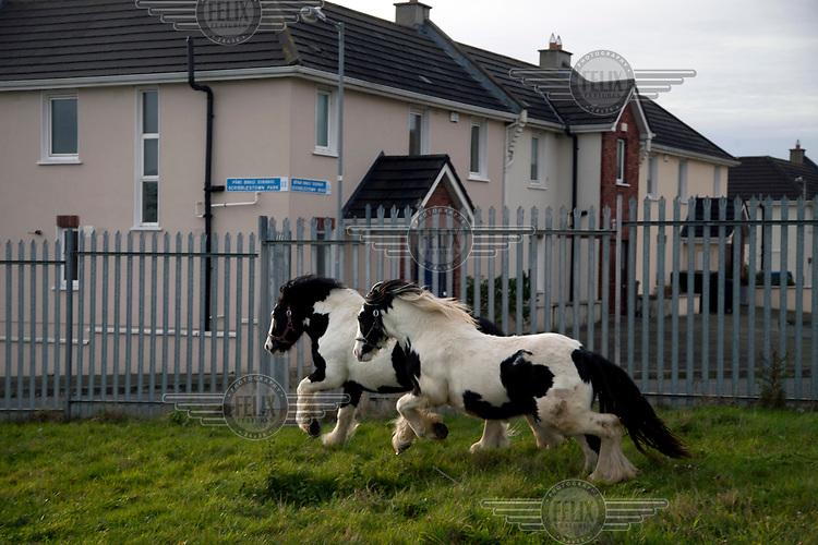 Ponies gallop in a field beside a housing estate.