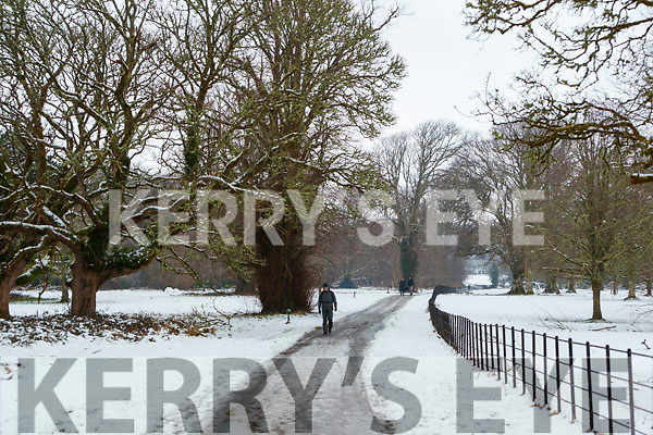 Snow in Killarney National Park, on Saturday last.