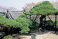 Yoshimine-dera is a shrine dedicated to the treatment of lumbago and features the six hundred year old Gliding Dragon Pine.