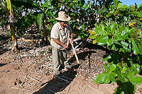 Rural scene Holguin Province, Cuba. 6-12-10