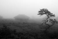 Arhuaco huts in the mist. Sierra Nevada de Santa Marta, Colombia.