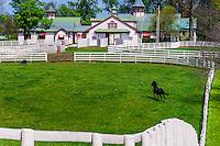 Thoroughbred horse in pasture, Calumet Farm, Lexington, Kentucky USA.