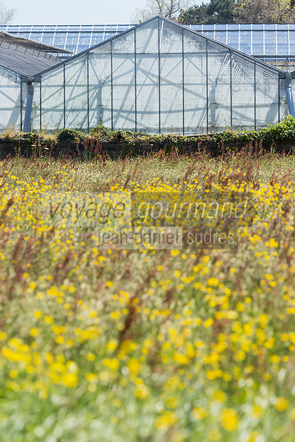 Royaume-Uni, îles Anglo-Normandes, île de Guernesey, Vale:  Serre // United Kingdom, Channel Islands, Guernsey island, Vale: greenhouse