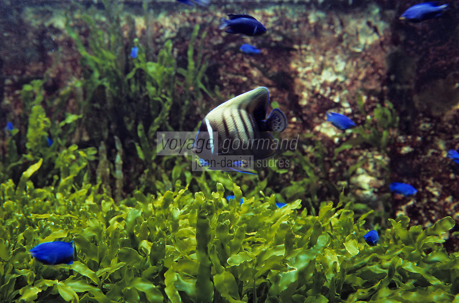 Europe/France/Bretagne/56/Morbihan/Vannes: Aquarium de Vannes