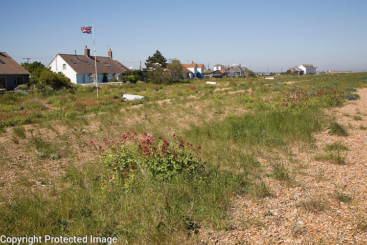 Vegetated shingle beach habitat at Shingle Street, Suffolk, England