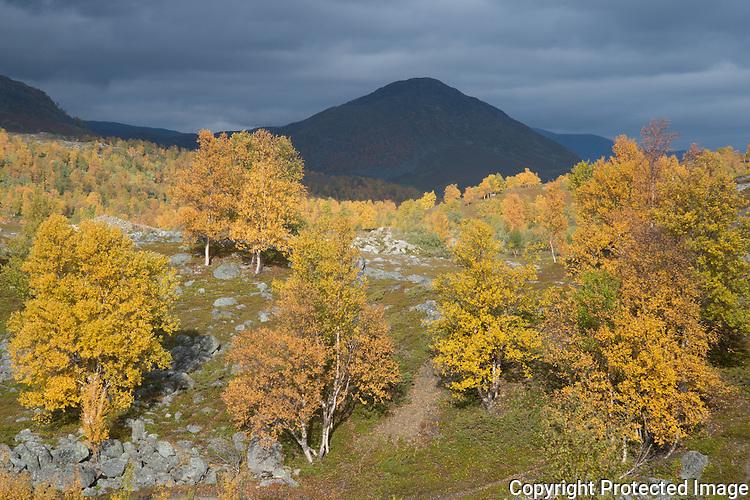 Høstfarger i Kvalsunddalen. --- Fall colors in birch forest.