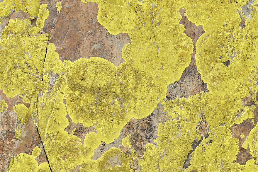 yellow stone lichens, La Serena, Extremadura, Spain