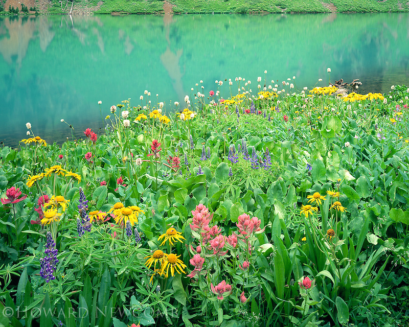 Lush wildflowers along the shore of Blue Lake, near Telluride, Colorado
