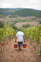 The harvest ..La vendemmia
