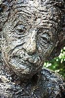 Washington DC Einstein Statue