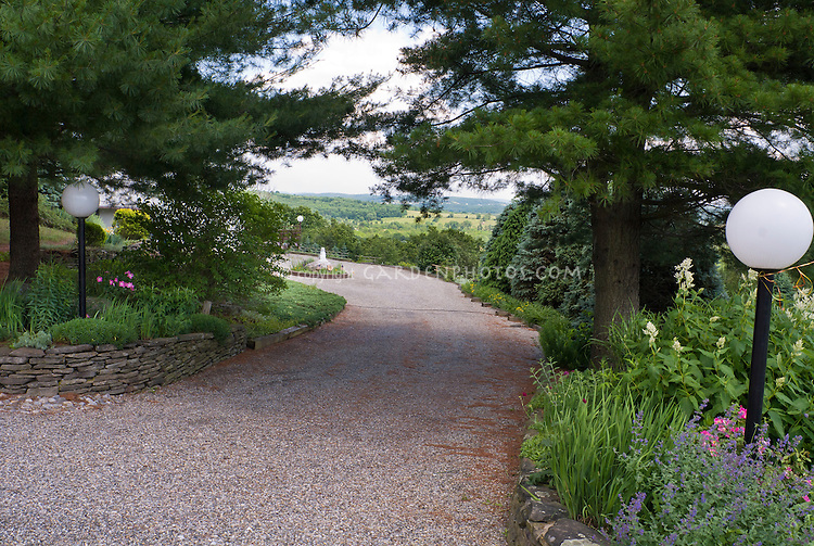 Allee made by two pine trees, evergreens, view vista, driveway