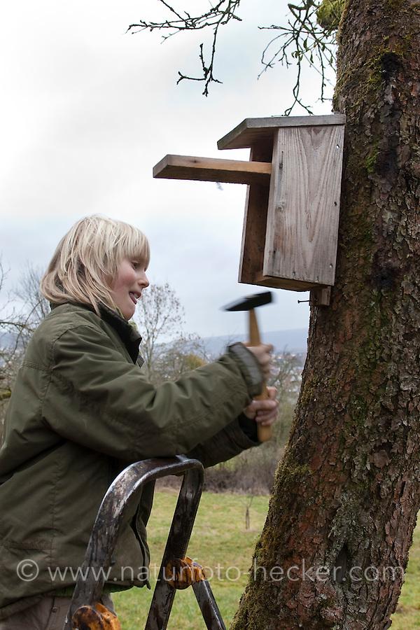 Nistkasten, Kind hängt Vogel-Nistkasten für Halbhöhlenbrüter in einem Obstbaum auf, Garten
