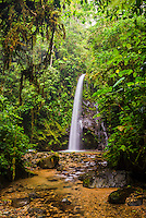 Waterfall San Vincente, Mashpi Cloud Forest in the Choco Rainforest, Ecuador, South America