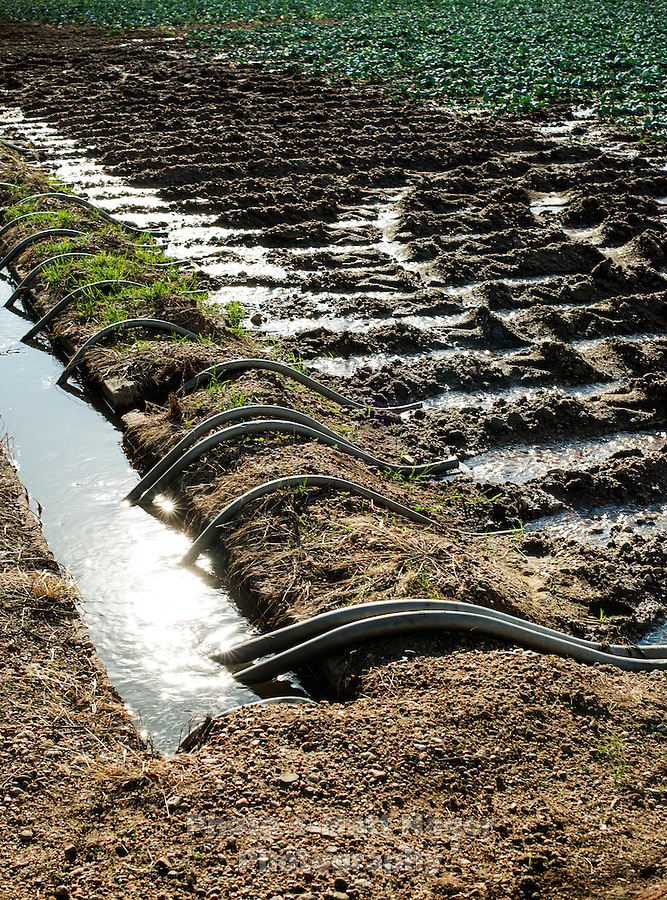 Siphon irrigation pipes at Sakata Family Farms, in Brighton, Colorado, Thursday, June 19, 2015. Sakata Family Farms grows onion, barley, broccoli, sweet corn and cabbage.<br /> <br /> Photo by Matt Nager