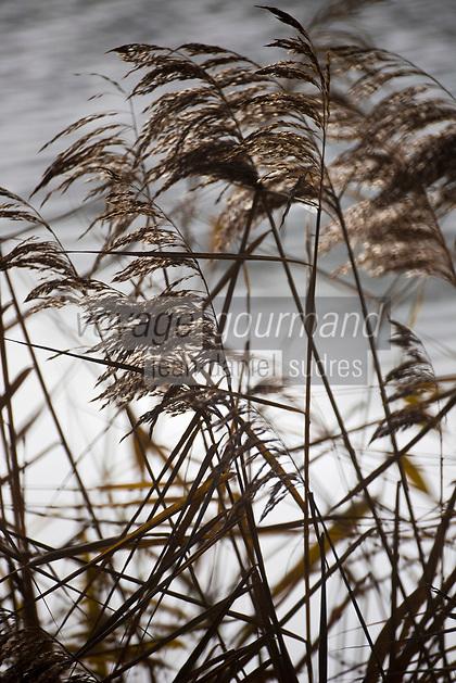 Europe/France/Centre/41/Loir-et-Cher/Sologne/Chambord: Château de Chambord - Roseaux sur les bords du Cosson  // France, Loir et Cher, Loire Valley listed as World Heritage by UNESCO, Chateau de Chambord :  Reeds in the park