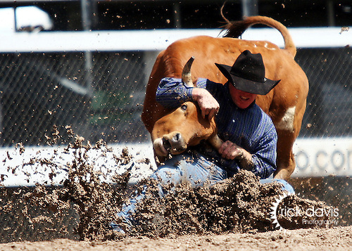 Steer Wrestling in the mud at Cheyenne Frontier Days Rodeo