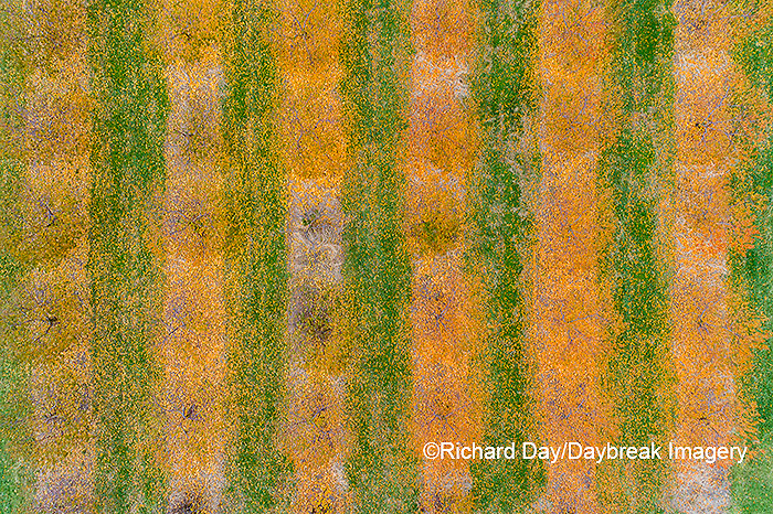 63801-12114 Peach orchard in fall-aerial  Marion Co. IL