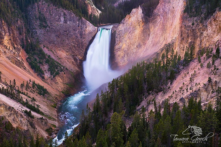 "A photo of the lower falls in Yellowstone's ""Grand Canyon of the Yellowstone""."
