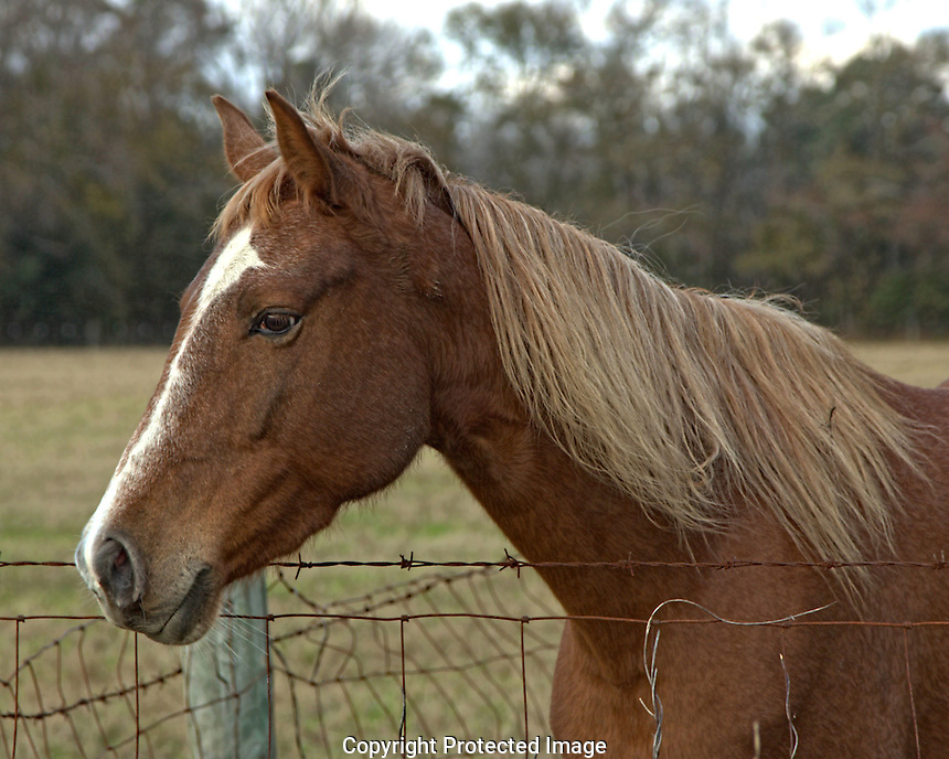 OK, it's not REALLY Mr. Ed, but this horse ran up to the fence as soon as I got out of my car and I got the pose from him. Maybe it is Mr. Ed and he winters here in South Carolina.