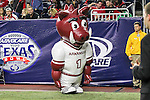 The Arkansas Razorbacks mascot in action during the Advocare V100 Texas Bowl game between the Arkansas Razorbacks and the Texas Longhorns at the NRG Stadium in Houston, Texas. Arkansas defeats Texas 31 to 7.
