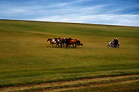 "Horsemen herd their horses using a motorcycle on the grassland..""The Horse Boy"", embarked on a therapeutic journey of discovery with his parents to visit a succession of shaman healers in one of the most remote regions in the world. Following Rowan's positive response to a neighbour's horse, Betsy, and some reaction to treatment by healers, Rowan's parents hoped that the Mongolian shamanistic rituals along the route and the prolonged contact with horses would help to unlock their son's autism and assist his development.."