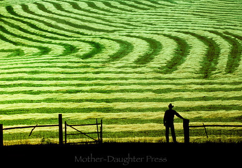 Farmer surveys new mown hay in farm  field as the sun sets on work well done, Midwest USA