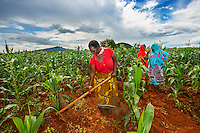 AWright_Tanz_008804.tif<br />