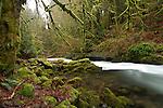Washington, Southwestern, Battleground. Cedar Creek flows through lush green surroundings upstream from the historic Cedar Creek Grist Mill.