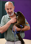 Gabe Kerschner, with Conservation Ambassadors, shows off Samantha, a lemur, during a presentation at the Boys &amp; Girls Club of Western Nevada in Carson City, Nev., on Tuesday, June 12, 2018 as part of the Carson City Library's Summer Learning Challenge. <br /> Photo by Cathleen Allison/Nevada Momentum