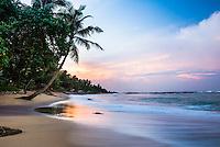 Mirissa Beach, palm tree at sunrise on the South Coast of Sri Lanka, Asia. This is a photo of a palm tree at sunrise on Mirissa Beach, Sri Lanka, Asia. Mirissa Beach is a popular sandy beach covered in palm trees on the South Coast of Sri Lanka.