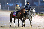 November 1, 2018: B Squared, trained by Doug F. O'Neill, exercises in preparation for the Breeders' Cup Sprint at Churchill Downs on November 1, 2018 in Louisville, Kentucky. Alex Evers/Eclipse Sportswire/CSM