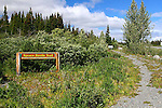 IMAGES OF THE YUKON,CANADA , SPRUCE BEETLE TRAIL