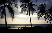 Big Island, Hawaii. View out to sea between palm trees with silver sunlight reflecting off rock pools at historic Place of Refuge.