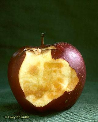 CX02-001a  Oxidation - apple oxidizing in air