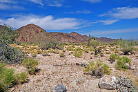 View of the Colorado Desert at the southern entrance to Joshua Tree National Park, CA.