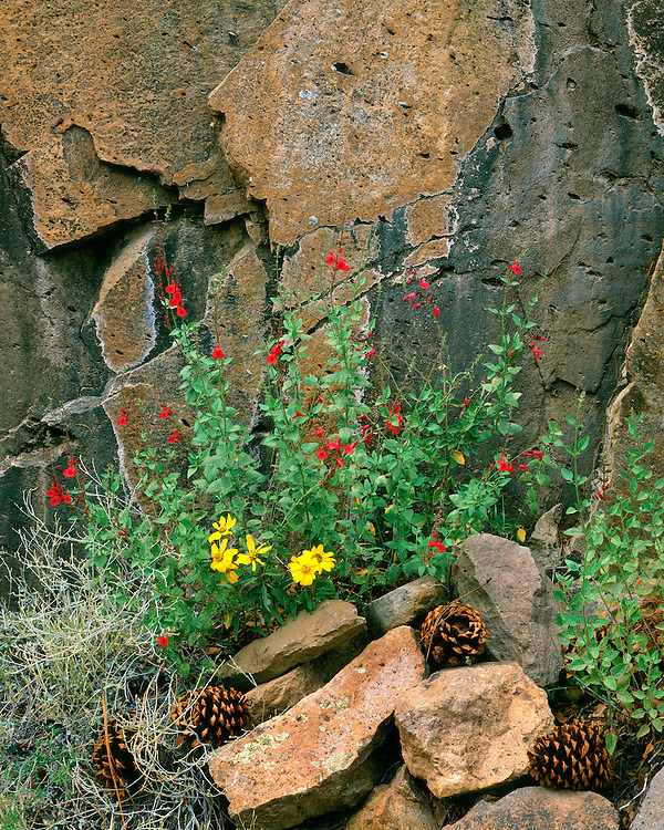 Arizona Sage (Salvia lemmonii) and Heliopsis parbifolium in bloom in the Chiricahua Mountains; Coronado Natoinal Forest, AZ