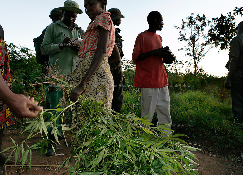 Woman arrested for marijuana is Nchagwz-Chacha and the village is Bonghugu. There was also a man arrested (who didn't live there, but made the mistake of visiting at the wrong time) his name is Dew-Makori..Paul Jones (the Jones of Dow Jones) has pumped 20 million dollars into Grumeti Reserve and conservation efforts to date and has nothing yet that will recoup that money.  Before he can bring wealthy tourists in on their lear jets, he has to bring the animals back into Grumeti Reserve.  To do that, he and his team are doing everything right for conservation.  The human bycatch from their private army of anti-poaching team is another story, but in terms of conservation, they are doing a great job.  ..Their anti poaching effort has probably just moved the big-time poachers elsewhere.  This private army has no authority to do house to house searches, but they do anyway.  Money talks and this army brings a local policeman and Park Ranger in tow.  If the policeman discovers a little marijuana, it can mean 6 months in jail for the offender... Even though everyone knows all the Wakuria grow pot... The private army has been so effective, however, that the wildlife probably will come back to where the wealthy tourists can view it from their infinity-edge pool at their $2000 a night luxury home.  But the human bycatch is too severe and hostility is building up in the communities...The Grumeti Reserves are trying to reshape the entire northeast corner of the park area.  They hire 1400 workers from the neighboring communities and have an extensive outreach program.  They are trying to create programs where they can replace the protein lost from their crack down on poaching.  They have a fish farm program with the Heifer project that allows folks to farm Tilapia.  They also employ only people from the local villages to do construction. They are developing a five star hotel and an exclusive camp that will cost 1500 to $2000 a night and only put 40 more tourists a day into the par