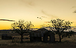Old farm sheds and homestead at sunset in Quirindi countryside, New England, NSW, Australia