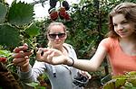 Foto: VidiPhoto<br /> <br /> SLIJK-EWIJK – Bramen eten tot je een ons weegt. Enkele consumenten plukken dinsdag alvast de eerste 'bijna gratis' bramen bij fruitteler Frederik Bunt in Slijk-Ewijk in de Betuwe. En ze mogen er bovendien net zoveel eten als ze lusten. De bramenprijs is door het enorme aanbod en prijsmanipulatie van de fruitveilingen -zegt Bunt- ingestort, waardoor de oogstkosten twee keer zo hoog zijn als de opbrengst. Om te voorkomen dat de bramen gaan rotten aan de struiken, mogen consumenten ze zaterdag komen plukken voor slechts 2 euro per kilo en er ter plaatse net zoveel nuttigen als de maag het toelaat. De aankondiging op Facebook is inmiddels 1100 keer gedeeld. De teler vreest nu een complete verkeerschaos. Hij had gerekend op zo'n 150 plukkers, vermoedelijk worden er dat minstens tien keer zoveel.
