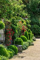 France, Maine-et-Loire (49), Angers, château d'Angers, les jardins, massif le long du mur du logis du gouverneur avec rosiers, buis en topiaire, anémone du Japon, sauge...